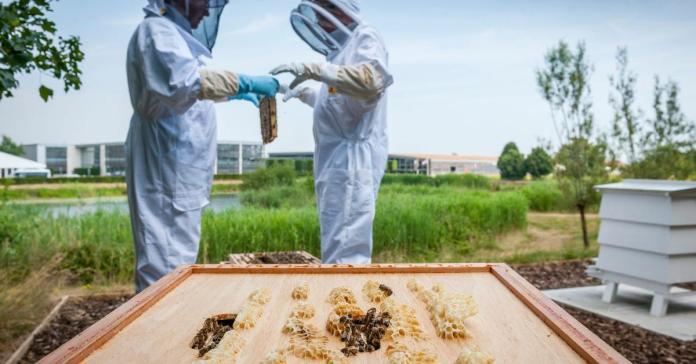 Rolls-Royce открыл вакансию пчеловода. Платить за эту работу не будут